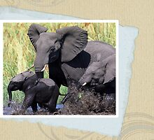 Family of elephants,Botswana by leksele