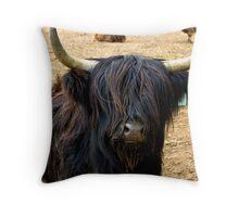 Highland Cattle #2 Throw Pillow
