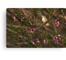 Sparrow in Tree Canvas Print