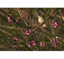 Sparrow in Tree Photographic Print