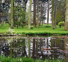 Woodland Park Reflections by artfulvistas
