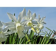 Long petals and blue skies Photographic Print