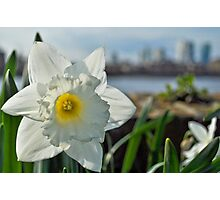 Docklands and a Daffodil Photographic Print