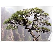 Bonsai tree on Huang Shan, Yellow Mountain, China Poster