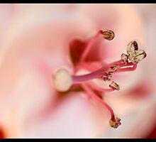 Macro Flower by Tom Palmer