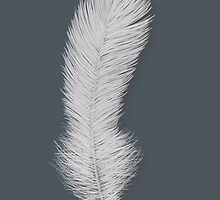 White feather by Sunflow