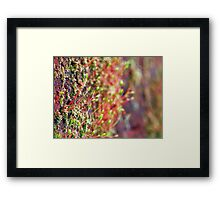 ©NS Small Forest IIA. Framed Print