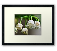 Lily-of-The-Valley - Bridgton,  Maine Framed Print