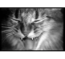 Kali Growling Photographic Print