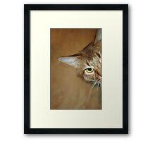 Kali Whiskers Framed Print