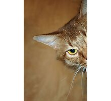Kali Whiskers Photographic Print