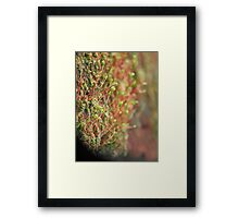 ©NS Small Forest IA. Framed Print