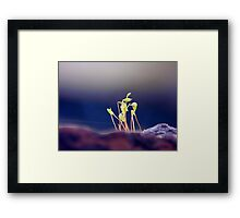©NS Tiny Web IA. Framed Print
