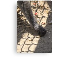 reaching for peanuts Canvas Print