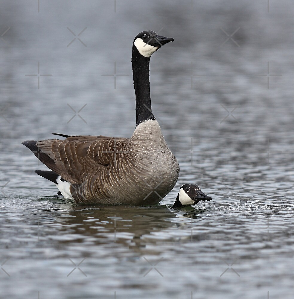 """""""All the way around the pond please"""" by Jim Cumming"""
