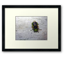 ©NS Green Hornet IIA. Framed Print
