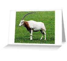 Scimitar horned oryx 5 Greeting Card