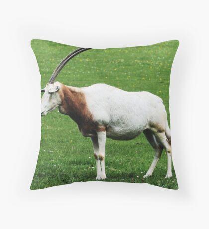 Scimitar horned oryx 6 Throw Pillow