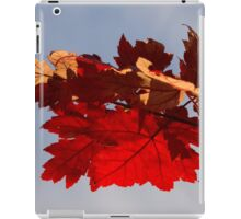 Cheerful Red Canadian Maple Leaves in the Fall iPad Case/Skin