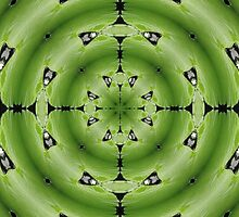 giant lily pad abstract by rhallam