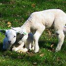 Two little Lamb by ienemien