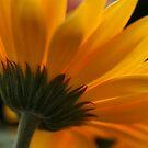 A Cup of Sunshine by ElyseFradkin