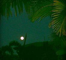 Tropics at Night by VenusOak