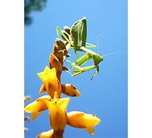 Mantis on Flower Photographic Print