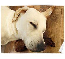 Sleeping like a Log Poster