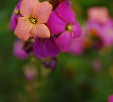 Wallflower World by photojeanic