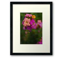 Wallflower World Framed Print