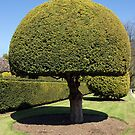 Topiary tree by iOpeners