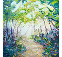 Promise Of Spring - A Woodland Path Photographic Print