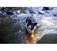 Indy in the golden pond! Photographic Print