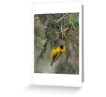 """Speke's Weaver 3 - 'What do you think of it so far?"""" Greeting Card"""