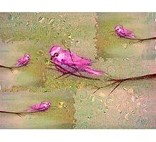 pink birds Photographic Print