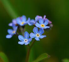 Spring Bouquet by Simon Pattinson