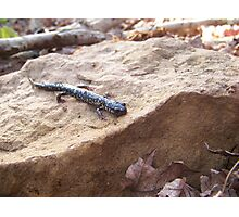 Speckled Newt Photographic Print