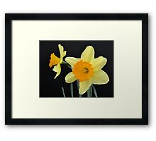 A Pair of Daffodils Framed Print