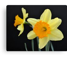 A Pair of Daffodils Canvas Print