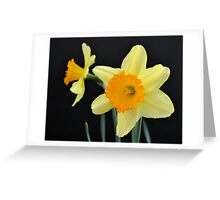 A Pair of Daffodils Greeting Card