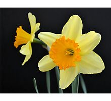 A Pair of Daffodils Photographic Print