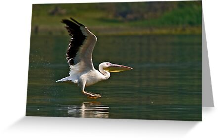 The perfect landing by Konstantinos Arvanitopoulos