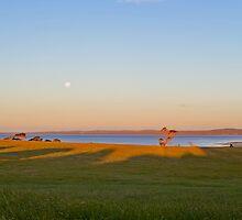Tenby Point at Western Port Bay by Aleksander