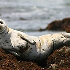 Injured White Seal by Inga McCullough