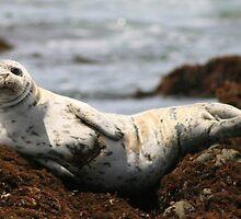 Injured White Seal by Inga McCullough
