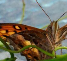 Butterfly Face Sticker