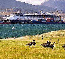 Zaamdam.Crucero,en Tierra del Fuego. Canal Beagle. by cieloverde