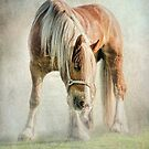 Gypsy in the morning mist by Tarrby