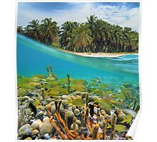 Coral reef fish underwater and coconut trees Poster